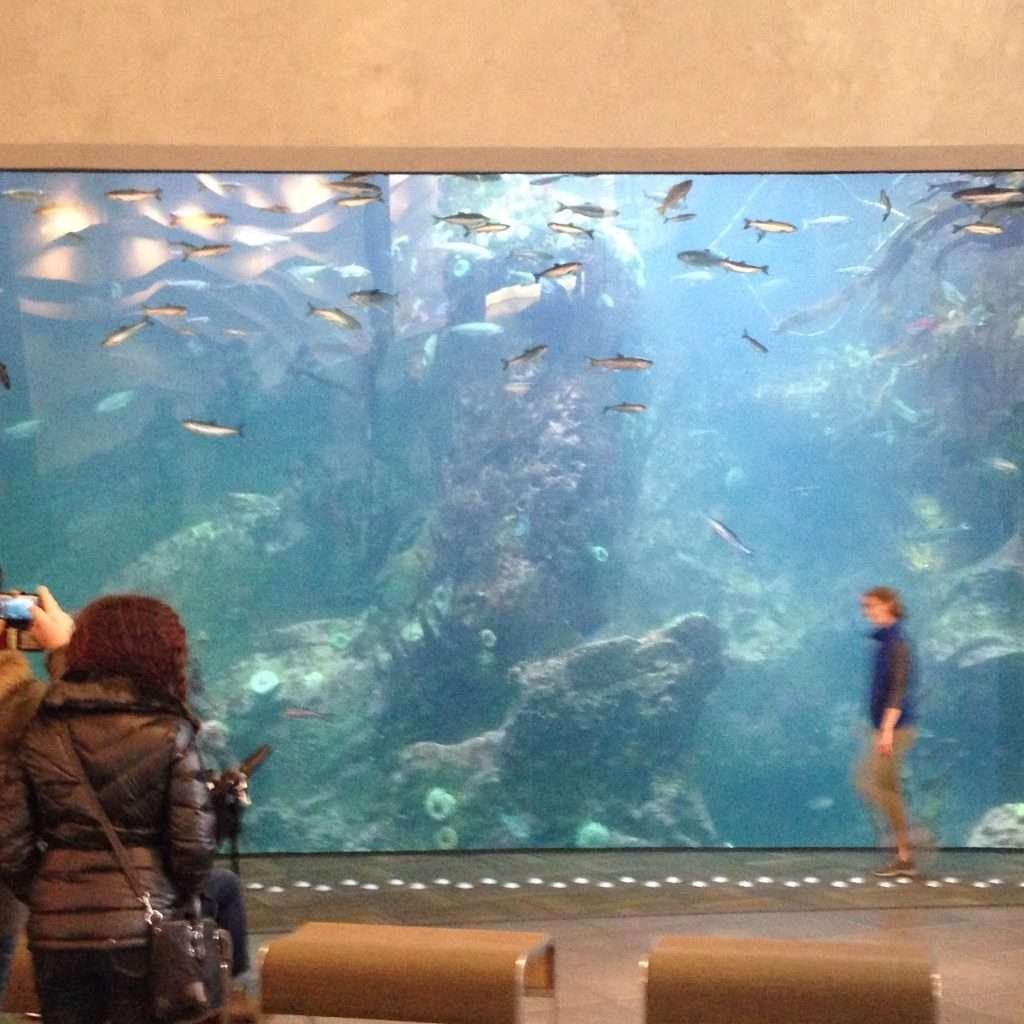 geoturtle-aquarium-big
