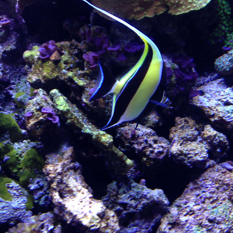 geoturtle-fish-nemo