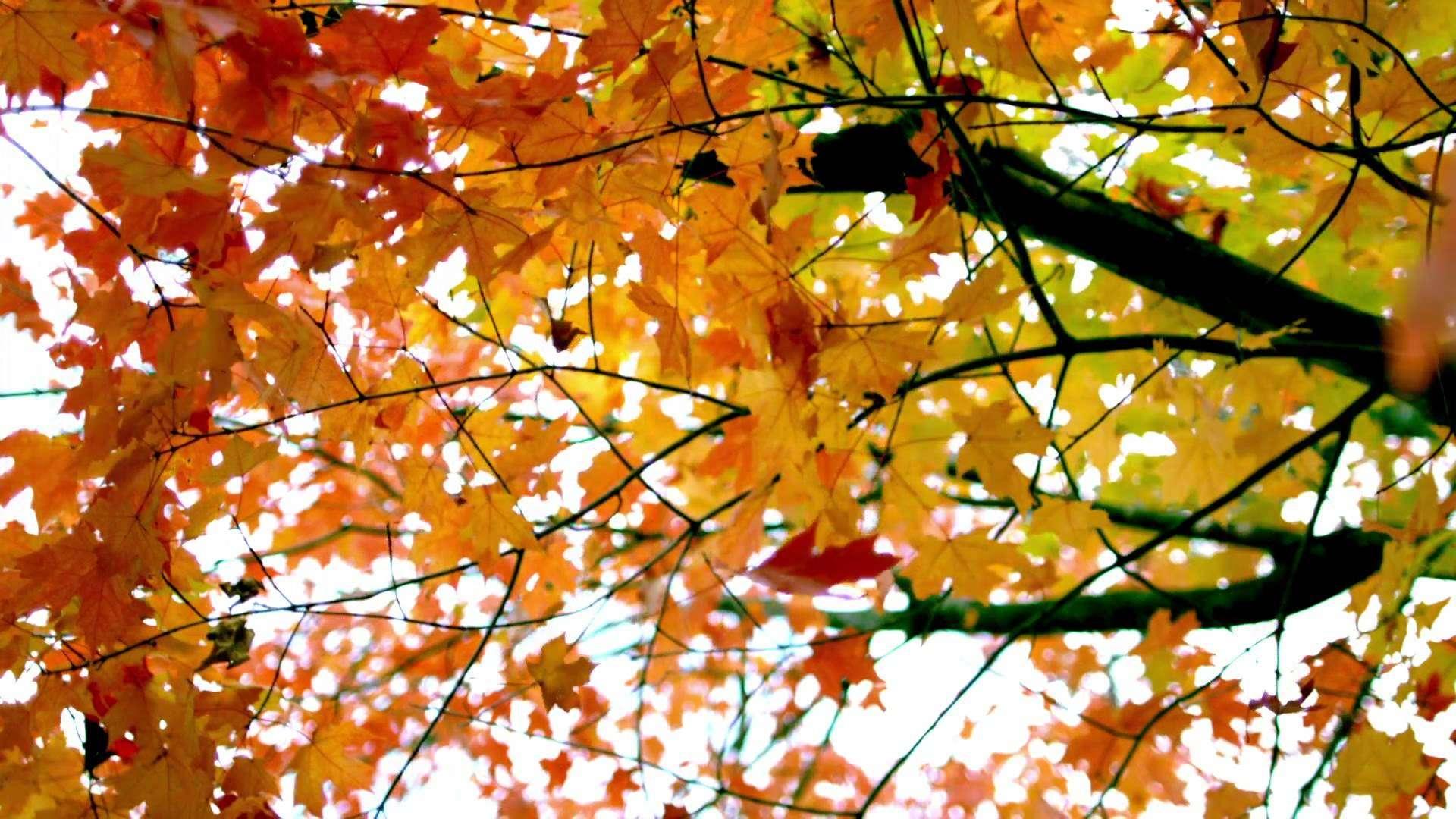 Картинки с осенними листьями анимация, приколы деревни